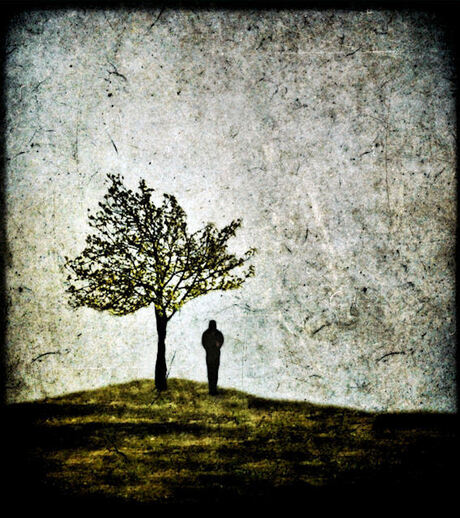 Lost, wondering, confused.. like the lonely tree...
