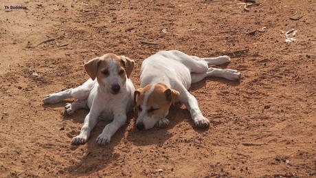 jonge honden 1903038285Rm1tw