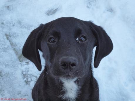 Joris onze hond poserend in de sneeuw