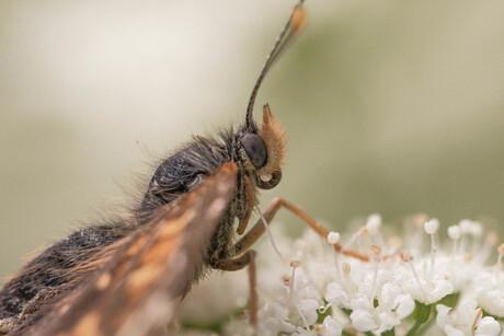 Vlinder in ander perspectief