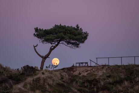 Eenzame boom met de maan als schemerlampje