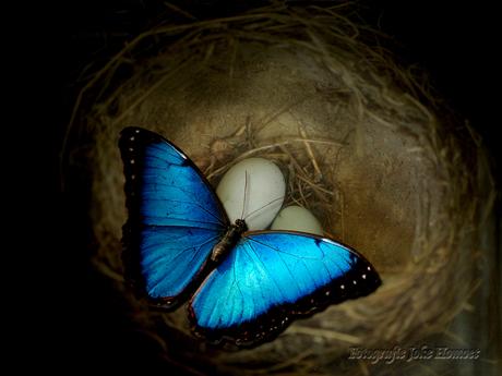 Onder vreemde vleugels