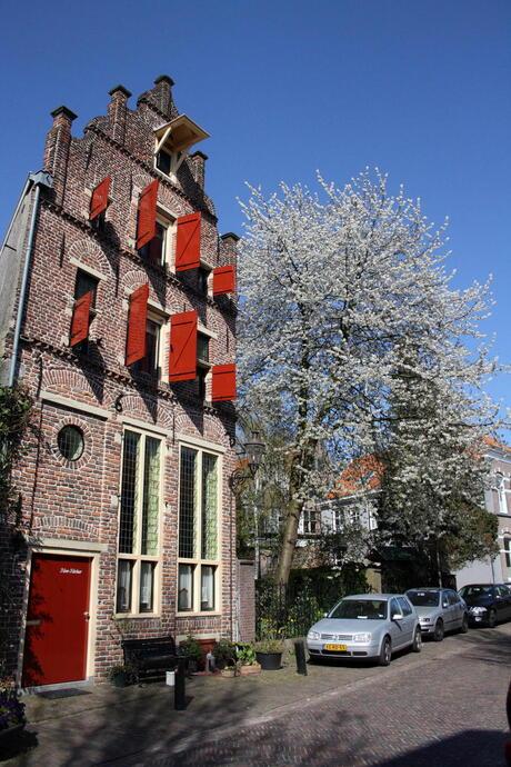 Mooiste boom van Deventer
