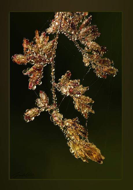 Natuurjuwelen 1