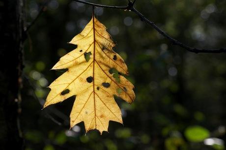 Autumn Oisterwijk Forrest 2013