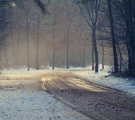 de lange weg naar huis...