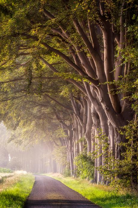 Ssstt, de bomen luisteren mee...