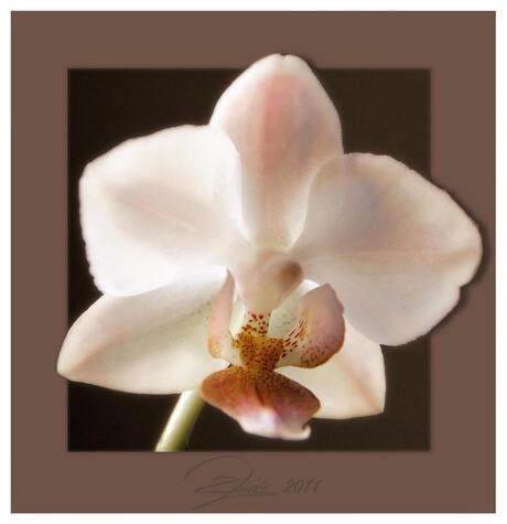 het eerste bloemetje