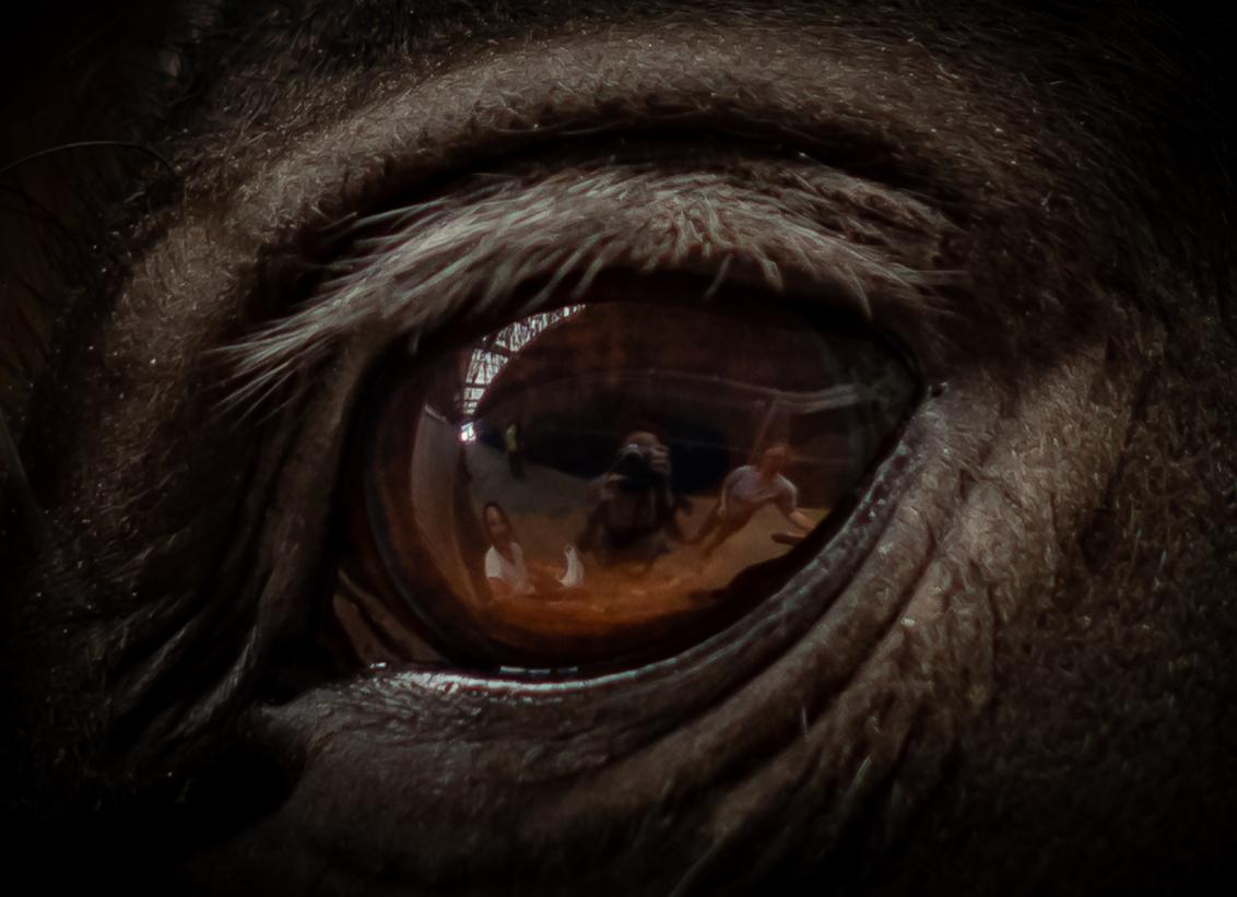 'Selfie' - - - foto door Taswor op 29-04-2019 - deze foto bevat: paard