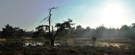 Een ochtend op de Veluwe