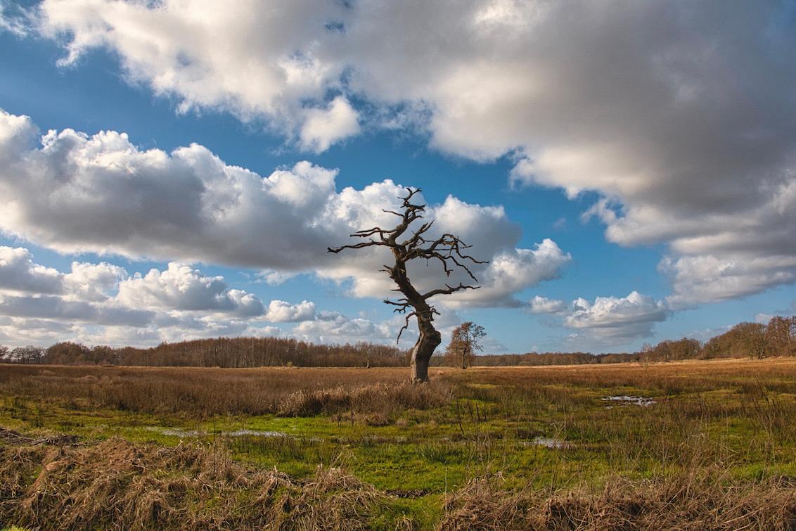 Vergankelijkheid - Sommige bomen verdienen een standbeeld.  Bedankt voor het bekijken en de reacties op mijn vorige uploads!  Groeten, Jeroen - foto door JerPet op 05-03-2021 - deze foto bevat: groen, lucht, wolken, boom, water, natuur, landschap, voorjaar, nederland
