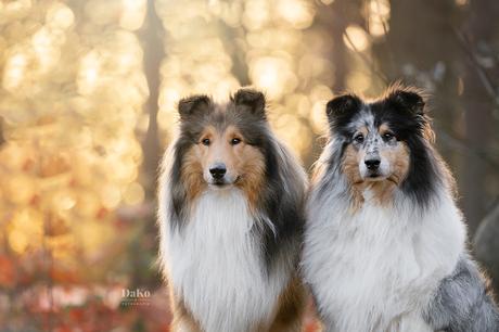 Gouden duo