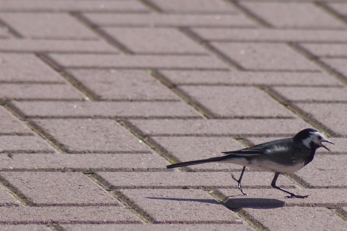 Aaaaah!!! WEG HIER!!! - Ja ik zou maar hard wegvluchten, toch mooi op de kiek! - foto door CoonArt op 30-03-2021 - deze foto bevat: macro, natuur, dieren, vogel, wildlife