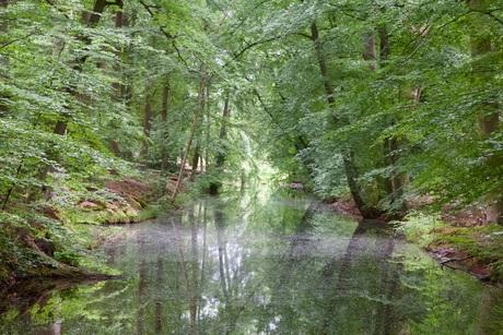 sfeer in het bos