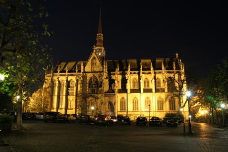 Basiliek by night