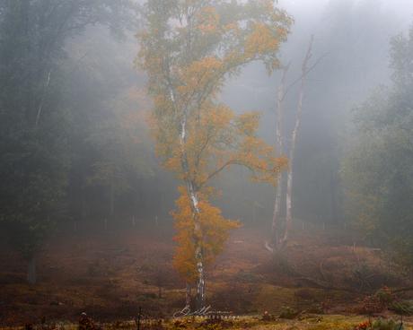 Herfstkleuren in de mist