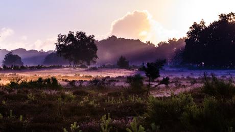 Wow, de eerste paarse tinten in de mist op de Westerheide, Hilversum!