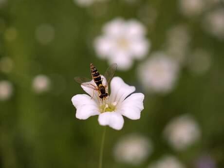 Insect op bloem