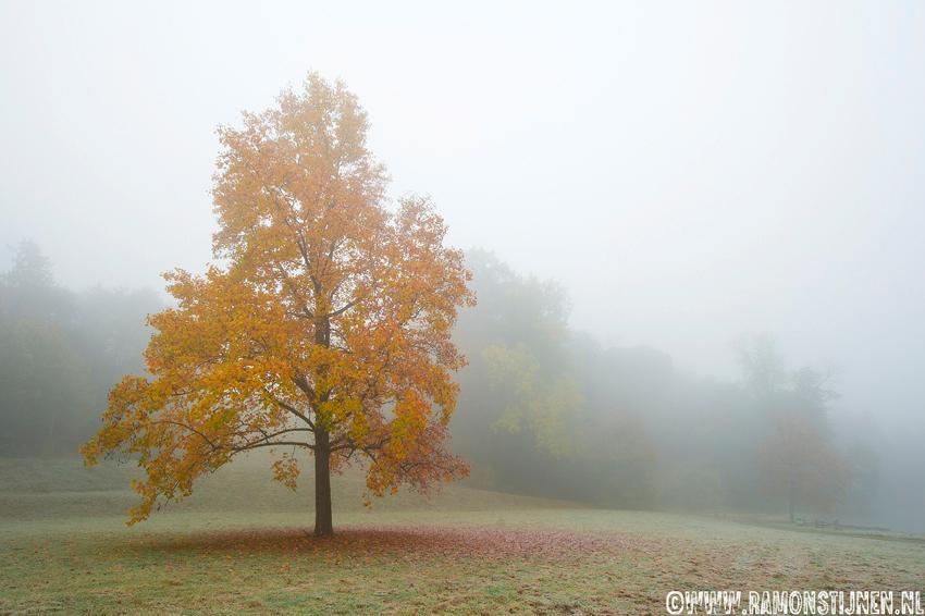 Herftskleuren in de mist - Gemaakt in Kasteelpark Elsloo, Limburg. - foto door eyefocus-76 op 30-10-2012 - deze foto bevat: boom, park, herfst, mist, bos, mistig, wandelen, herfstkleuren