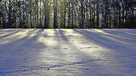sneeuw in de ardennen 1