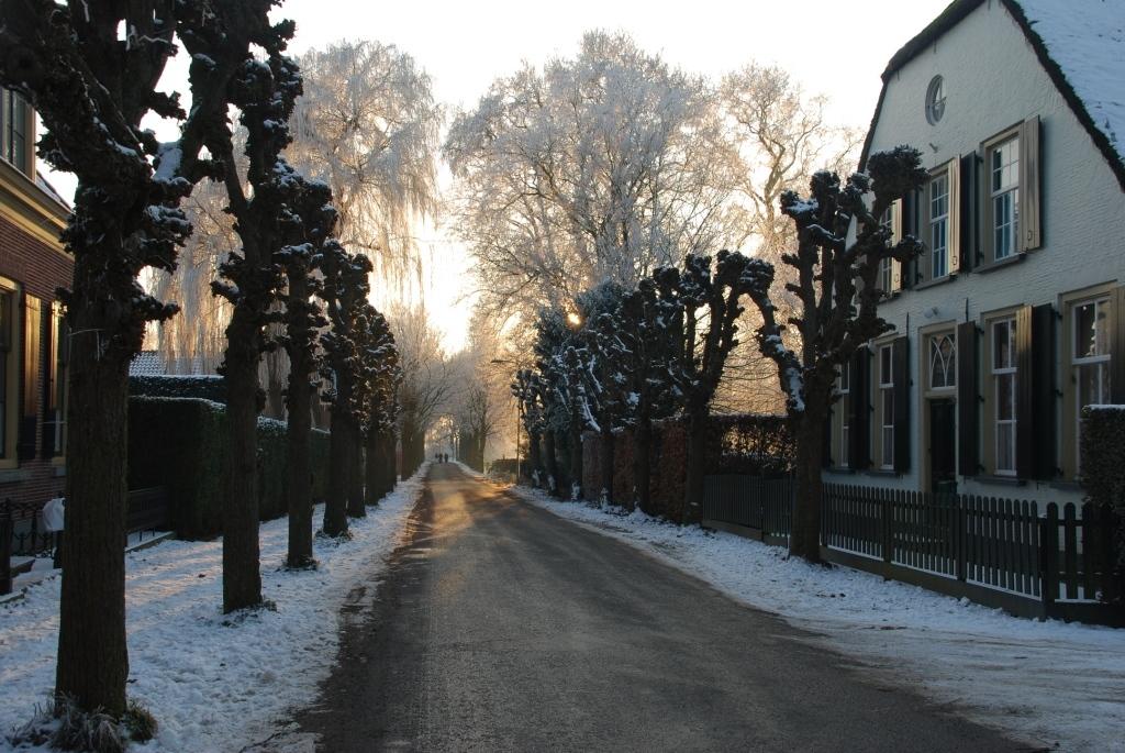 Winterse laan - - - foto door Lennart_9 op 14-01-2009 - deze foto bevat: sneeuw, winter, laan