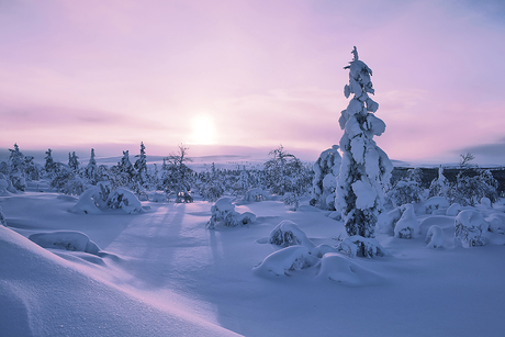 Zonsopkomst in Fins Lapland