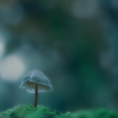 My space III - ... - foto door hillegonda op 23-10-2012 - deze foto bevat: blauw, paddestoel, herfst, bos