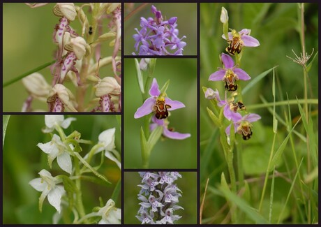 Orchideeencollage