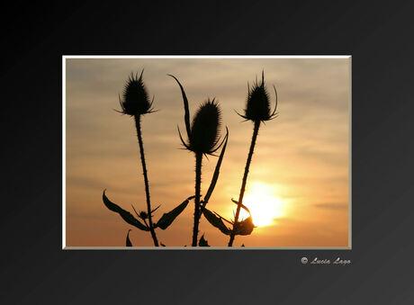 bloemen bij zonsondergang