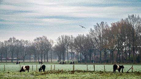 Misty morning ?