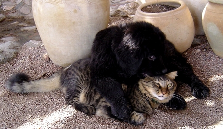 Leven als kat en hond