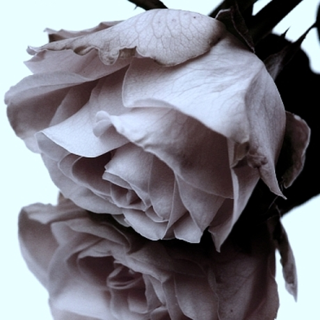 roze of emotions