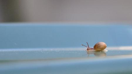 Slijmpie slak op de clico - Eerste poging met de 50 mm F 1,8 lens van Nikon. De groene clico sloeg spontaan blauw uit - of zou dat aan de instelling van de camera liggen ;-) - foto door WillyHuisman op 29-10-2016 - deze foto bevat: macro, natuur, dieren