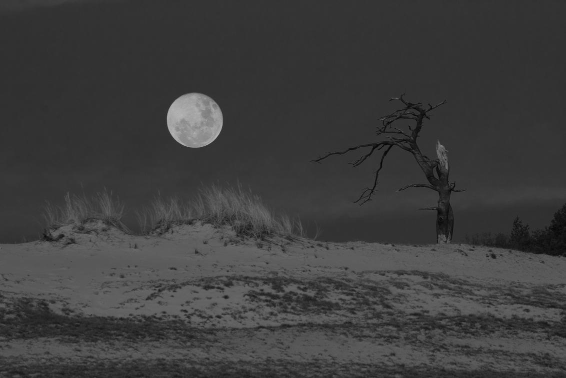 Rising Moon - Rising Moon - foto door tripod3 op 12-08-2015 - deze foto bevat: tree, moon, sand