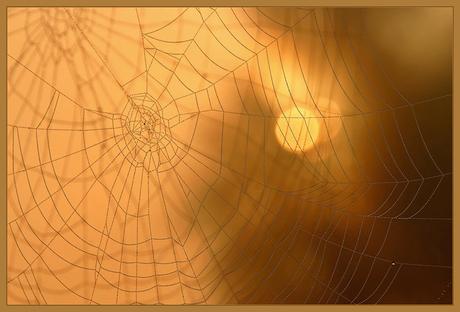 Spinnenweb, mijn 200ste