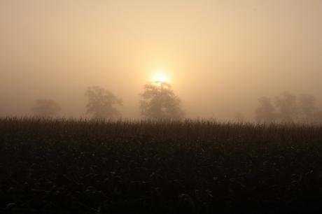 mist mist mist