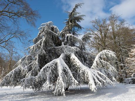 Boom in de sneeuw achterkant