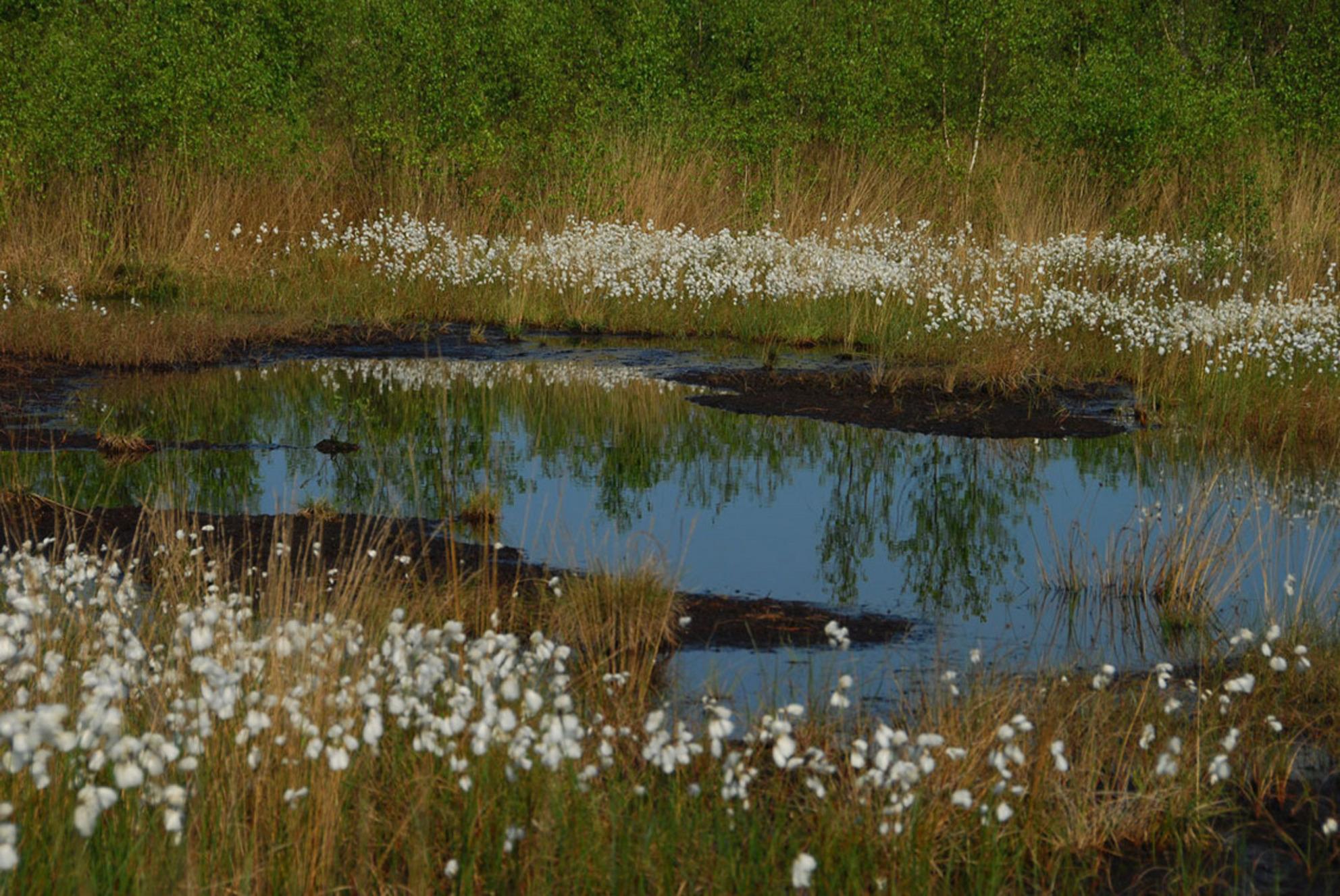 Bargerveen - Bargerveen is een prachtig veenlandschap. Voor de fotografie is er de nodige flora en fauna aanwezig om mooie plaatjes te schieten - foto door dienyart op 18-11-2011 - deze foto bevat: veenlandschap - Deze foto mag gebruikt worden in een Zoom.nl publicatie