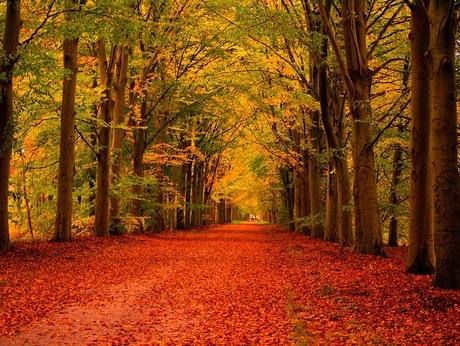 PB013243.jpg herfstkleuren