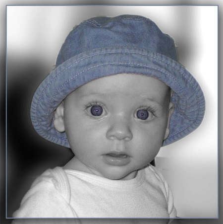 blauw hoedje - Merel met blauw hoedje - foto door vogeltje5 op 22-07-2009 - deze foto bevat: merel, vogeltje5, ubevri