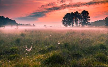 A beautiful morning - Even een berichtje van mij want het is best lang geleden dat ik zoom bezocht heb. Ik had net weer de tijd en de energie na super veel ontwikkelingen - foto door h.meeuwes op 30-09-2020 - deze foto bevat: natuur, mist, heide, bos, zonsopkomst, bomen, spinnenweb, dauw, groothoek, vroeg, canonr