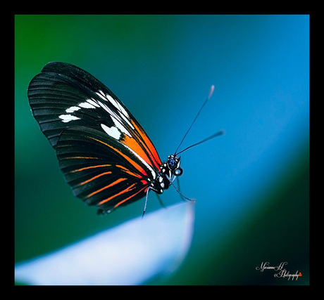 Vlindertuin Tropical zo de Berkenhof