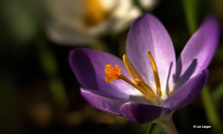 Zon en bloemen, altijd een mooie combinatie.