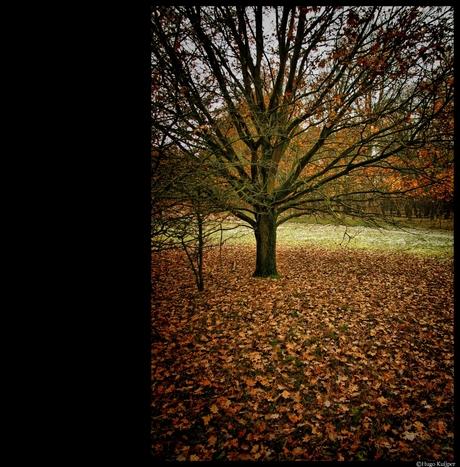 Autumn in AWD