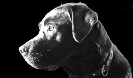 Onze hond....Ziggy