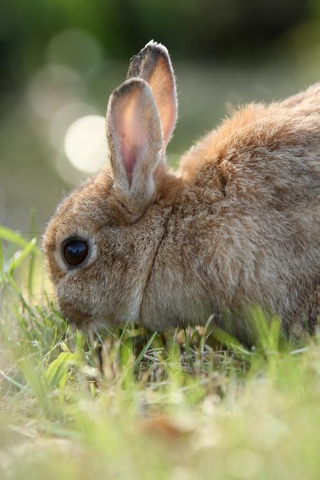 Konijntje - Dit konijntje zag ik vanmiddag in het AWD - foto door Martine van Doorn-Bos op 22-10-2011 - deze foto bevat: konijn