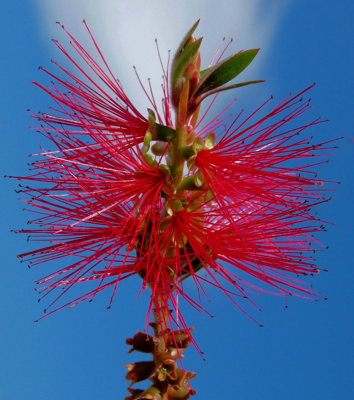 Rode bloemen uit Griekenland - Op het eiland Kefelonia zag ik deze prachtig bloeiende plant. - foto door megegj op 04-12-2010 - deze foto bevat: rood, bloem, flower, griekenland, kefalonia
