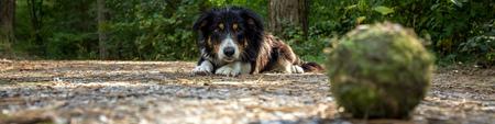 Ballen zijn belangrijk - Mijn hond heeft nogal een obsessie voor tennisballen. De brede visie in deze foto staat in contrast met de tunnelvisie van het onderwerp. - foto door Jdezeeuw op 09-03-2014 - deze foto bevat: spelen, duinen, bal, tennisbal, apporteren, hon