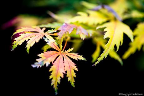 Herfst treed in
