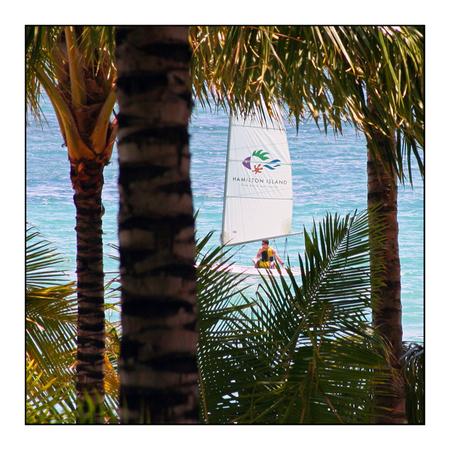 Sailing Home - Hamilton island in Australie. Great barrier reef. - foto door lokkjja op 06-08-2009 - deze foto bevat: blauw, zon, boom, water, boot, zeilen, australie, palm, eiland, great barrier reef